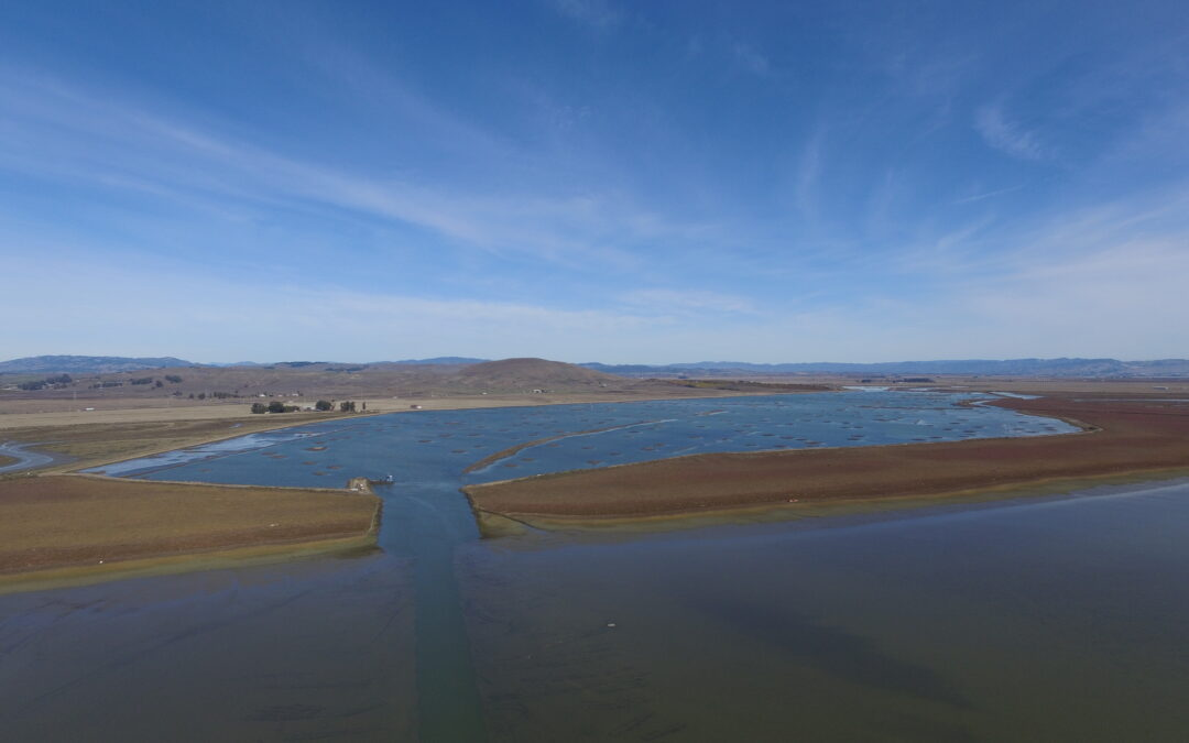Sears Point Wetland and Watershed Restoration